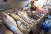Fish_Monger,_Dakhla